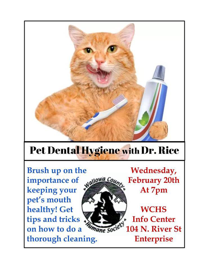 2019 Pet Dental Hygiene w Dr.Rice